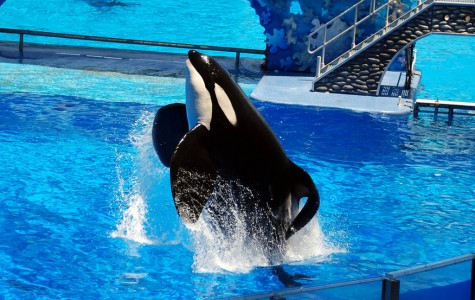 Editorial: Why SeaWorld should not be your vacation destination