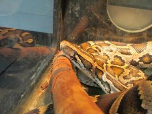 Slithering Python