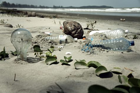 Plastic and glass waste from humans pose threats to marine life if left on beaches.