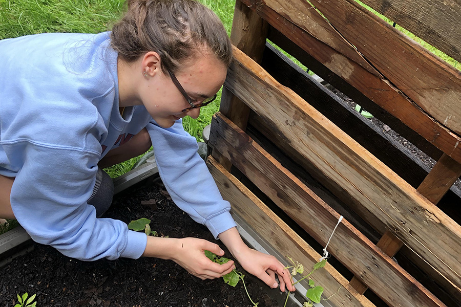 """Planting seedlings in a garden at school, freshman Maura Collins, along with Environment Club, plans to donate the produce to Parkway Food Pantry once it is grown. The club began this year with the help of English teacher Casey Holland and wants to spread awareness about the environment through gardening projects and information about being environmentally friendly. """"I'm passionate about the environment because my mom always loved gardening, so I spent a lot of my childhood outside,"""" Collins said. """"I want to specialize in sustainable urban planning, so I thought some exposure from the club might be good."""""""