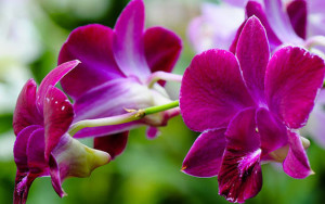 """Pantone names """"Radiant Orchid"""" as the 2014 color of the year"""