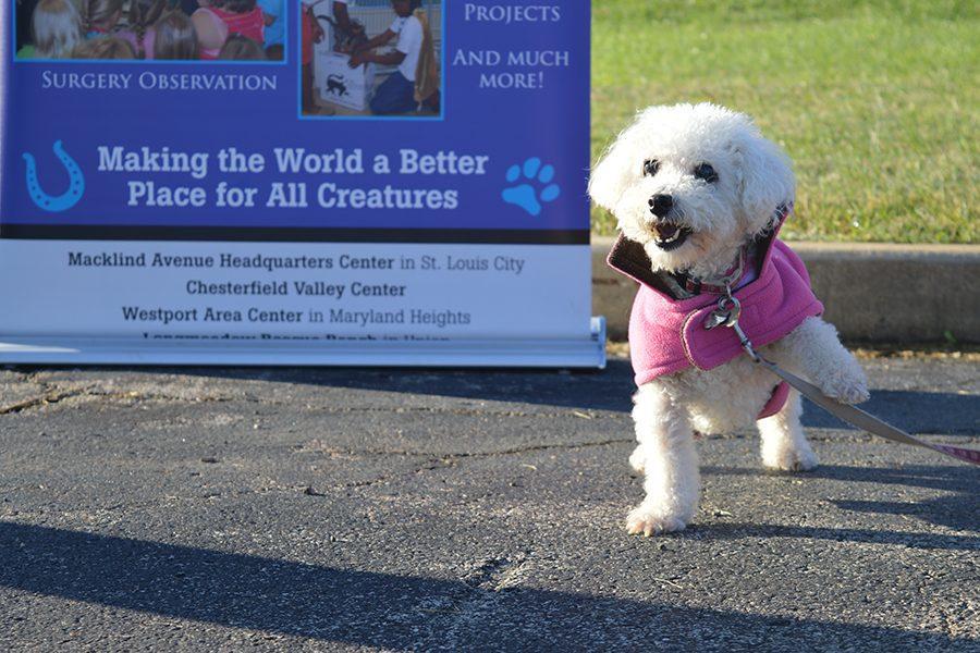 Senior Sarah Ayers raises money and awareness for animal shelters